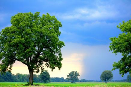 Photo of Trees by Thom Tindall